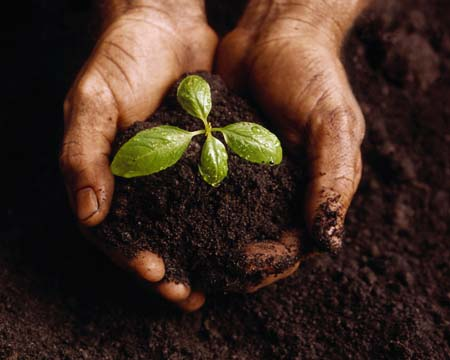 seedling_in_hand